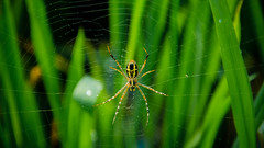 The Eight Legged (Udaya Karthick) Tags: morning autumn sky mountain flower macro green water beautiful grass yellow landscape temple boat spider spring dam blues dew greens medicinal pleasent the krishnagiri