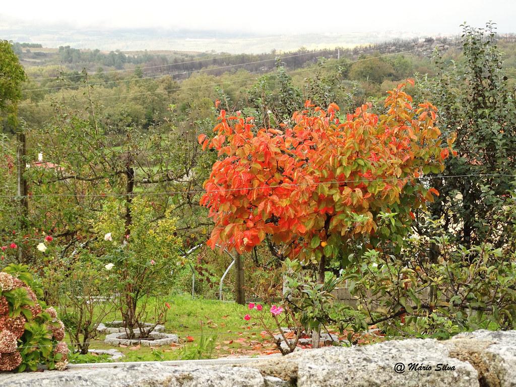 Águas Frias (Chaves) - ...Cores variadas que a Natureza nos proporciona