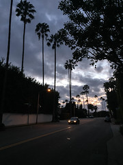 Dusk in Beverly Hills, CA (ChrisGoldNY) Tags: trees sunset sky tree car silhouette skyline night la losangeles forsale dusk palm albumcover beverlyhills bookcover iconic bookcovers albumcovers licensing chrisgoldny chrisgoldberg chrisgold chrisgoldphoto chrisgoldphotos