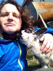 Lamb and me