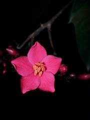 ورود زهور وردة زهرة (abuhammamksa) Tags: flowers flower green وردة زهرة ورده زهور زهره