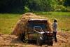rice to the mill (mithra srilanka) Tags: srilanka paddyfield riceharvest kamatha handtractor paddyland paddyharvest ricesheafs pollonnaru