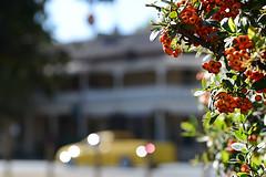 Yellow Ute (PhotosbyDi) Tags: blur berries bokeh utility pickup ute shallowdepthoffield euroa nikond600 tamronf2890mmmacrolens sevencreekshoteleuroa