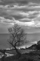 Saint-Jean-de-Luz (Herv KERNEIS) Tags: ocean blackandwhite bw france tree clouds gris noiretblanc nb monochrom nuages arbre paysbasque saintjeandeluz ocan larserve nikond700 tamron2470mmf28