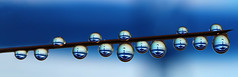 Water ballet (Lorraine1234) Tags: blue macro water droplets drops waterdrops focusstacking