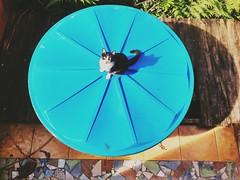O centro do universo (stelaheberle) Tags: praia azul cat gato felinos animais universo
