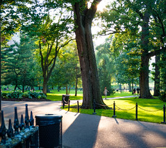Boston Park (allie.hendricks.photography) Tags: year 2015