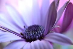 DSC_3142 (sykora_greg) Tags: nikon sigma 1770 kwiat kenko d3300