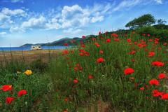 Poppies near the sea (filipon) Tags: red sea sky tree green grass yellow sony poppy poppies caravan 2470 a850