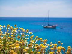 Minorca (johnnewstead1) Tags: sea holiday boat seaside daisy menorca minorca daiseys
