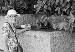 Una dama, una sonrisa y sus gatos callejeros  -  A lady, a smile and your stray cats (ricardocarmonafdez) Tags: city urban blackandwhite bw cats streets blancoynegro monochrome smile lady canon eos monocromo blackwhite o ngc ciudad gatos tenerife urbano sonrisa calles dama urbanscape urbanlandscape islascanarias urbanlife urbanscene 60d ricardocarmonafdez