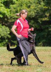 2016-05-22, IPO Training-3 (Falon167) Tags: dog shepherd rhonda german miles gsd germanshepherddog