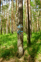 # () Tags: wood plant tree nature sign pine forest pointer grove reserve boron copse  coppice