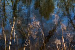 Puddles (Multiple Exposure) 87 (pni) Tags: blur reflection water suomi finland helsinki multipleexposure helsingfors tripleexposure multiexposure seurasaari skrubu pni flisn pekkanikrus