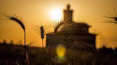 Here comes the summer sun... (MPC.76) Tags: summer hot sol sunrise de casa lluvia verano salida sortida trigo bages 2016 paisatje lluvi lluvi