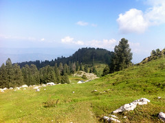 IMG_2131 (Jashir Siddiqui) Tags: pir panj sanctuary bird muree gali dunga park national ayubia nathiagali moshpuri mukeshpuri