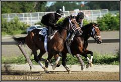 Rachel's Valentina works (Spruceton Spook) Tags: horses horseracing belmontpark rachelalexandra rachelsvalentina