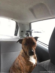 Sat, Jun 25th, 2016 Found Male Dog - Near Spar, Leixlip, Kildare (Lost and Found Pets Ireland) Tags: dog june found near spar kildare 2016 founddognearsparkildare