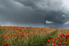 Grey & Red (fieldino34) Tags: flowers red summer sky field clouds grey sussex nikon moody poppy atmospheric ditchling ditchlingbeacon nikond750