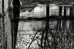 Herbst / Autumn (heiko.moser) Tags: autumn bw art blancoynegro canon mono noiretblanc outdoor herbst natur natura nb sw monochrom schwarzweiss nero discover einfarbig schwarzweis blackwihte entdecken heikomoser