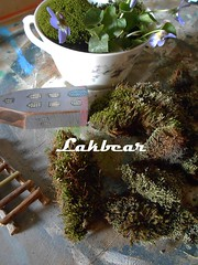 Cup of mini garden (LAKBEAR(D)) Tags: bear wood blue red white black green art home cup stone trash vintage garden beard diy moss artwork colorful ceramics paint acrylic symbol recycled handmade lace mosaic painted style polish used fairy attic antiques tradition squish footprint carbootsale stripy patterned reused madebyhand giftideas minigarden blueviolet upcycled restyled myowndesign pentart waxpaste stepbystepphotos easyideas lakbear beautifulcraft