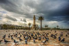 Konak (Nejdet Duzen) Tags: city travel bird animal turkey square cloudy pigeon trkiye palm clocktower palmiye konak izmir ku gvercin meydan turkei hayvan seyahat ehir saatkulesi bulutlu