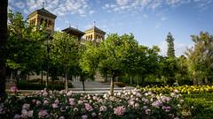 Primavera en el Parque Maria Luisa