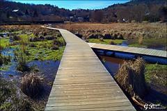 LAC D'AYDAT, TERRE D'AUVERGNE (Gilles Poyet photographies) Tags: nature lac soe auvergne puydedme autofocus aydat aplusphoto artofimages rememberthatmomentlevel1