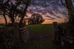 Leading to the sunset (Explore) (trevorhicks) Tags: trees sunset field canon gate farm devon hedge tamron 6d