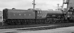 Carnforth Celebrity - 4472