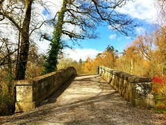 Old stone bridge (JulieK (thanks for 8 million views)) Tags: bridge trees ireland irish wall landscape outdoors scenery shadows cork scenic dogwood hww donerailepark