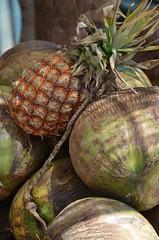 Coconuts in Puerto Nuevo, Mexico (Rob.Bertholf) Tags: tourism beach mexico puerto coconut tourist spanish coco pineapple creativecommons tropical bajacalifornia baja nuevo cocos puertonuevo bajamexico mexicancoconut