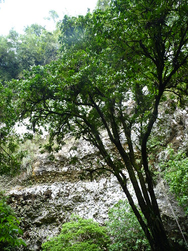 Rio Camuy caves sinkhole looking skyward