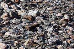 Les galets du Gardon (Isaszas) Tags: france canon soleil europe outdoor stones lumire rivire midi extrieur gard berges sdfrankreich languedocroussillon mditerrane galets southfrance gardon eos5d kiesen zuidfrankrijk saintjeandugard mialet gardondemialet falguires isasza