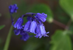 DSC_1132 (PeaTJay) Tags: flowers plants macro nature gardens fauna outdoors reading flora sigma micro closeups berkshire lowerearley nikond750