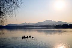 West Bound Ducks (fanjw) Tags: china sunset lake west ducks westlake hangzhou zhejiang waterscape sunsetlake lakescape lakesunset duckslake