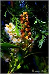Yesterday Spring (lukiassaikul) Tags: plants flora digitalpainting imagemanipulation photopainting creativephotography