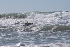 Surfing_TW04_ph1_2933 (TechweekInc) Tags: santa city beach la los tech angeles fair surfing event monica innovation tw techweek 2015