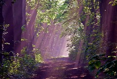 2016-05-13 Secret wood (65)light showering (april-mo) Tags: wood light mist mystery spring quiet peaceful bois brume mistymorning