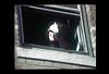 ss23-25 (ndpa / s. lundeen, archivist) Tags: people woman color film window boston massachusetts nick slide openwindow slideshow mass 1970s bostonians bostonian dewolf early1970s nickdewolf photographbynickdewolf slideshow23 inanopenwindow