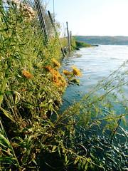 2015-08-03 06.22.44 1 (anastasiya_klenyaeva) Tags: summer beach nature water russia        saratov vsco vscocam vscorussia vscosaratov