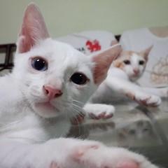 Cat My Cat Samsung Galaxy S4 Cat Lovers I Love My Cat I Love Cats แมว คิตตี้ at ห้องบันทึกเสียง แมวมองสตูดิโอ