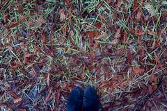Boulder Creek Forest (shannonontheroad1) Tags: redwoods mushrooms leaves