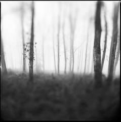 (Jib Peter) Tags: winter bw mist 6x6 film analog forest mediumformat kodak 120film hasselblad argentique trix400 kodakd76 flexbody