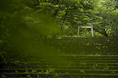 Green (RenField - Toel-ul Laputa) Tags: summer tree green art nature japan 50mm nikon sigma kagoshima     jpn kyusyu   aira      d800e