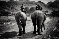 Ganeshapark (francois werner) Tags: voyage fuji thailande lphant 2016 xe2 xf27mm