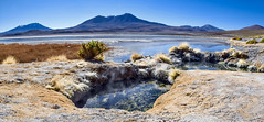 Laguna hedionda (Matthieu Jolivet) Tags: america montagne volcano flamingo bolivia andes neige laguna salar altiplano sudlipez volcan bolivie americadosul lipez andina ameriquedusud amrique amriquedusud lagunahedionda flamant flamantsroses surlipez