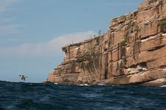 Zodiac view of Bonaventure Island (vagabond05) Tags: gaspepeninsula canada2016