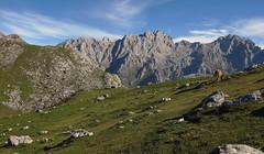 La Vega de Ario (Begoa Fernndez) Tags: mountain cow hiking asturias mountaineering hi vaca cordilleracantbrica picosdeeuropa asturies behia majada torrecerredo vegadeario cornin
