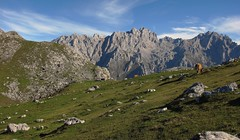 La Vega de Ario (Begoña Fernández) Tags: mountain cow hiking asturias mountaineering hi vaca cordilleracantábrica picosdeeuropa asturies behia majada torrecerredo vegadeario cornión